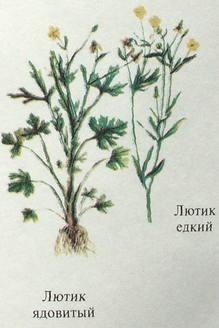 трава от глистов у взрослых